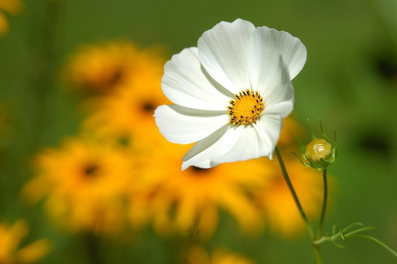 flower-180035_1280